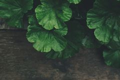 Leaf, Plant, Annual Plant Royalty Free Stock Photography