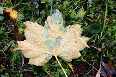 Leaf, Plant, Autumn, Grass Stock Photos