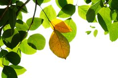 Leaf, Plant, Branch, Tree stock images