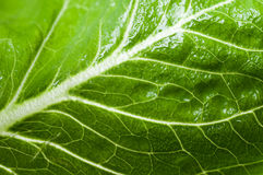 Leaf of a plant close up. Background, beauty royalty free stock photos