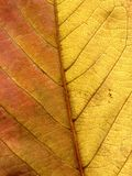 Leaf of a plant close up Royalty Free Stock Photo
