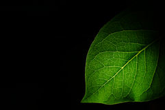 The leaf of a plant close up Royalty Free Stock Photo