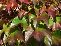 Leaf, Plant, Flora, Autumn Royalty Free Stock Photo
