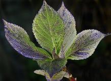 Leaf, Plant, Flora, Close Up stock photo