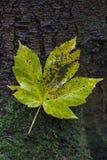 Leaf, Plant, Flora, Deciduous