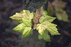 Leaf, Plant, Flora, Tree stock photos