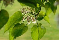 Leaf, Plant, Flora, Tree stock photography
