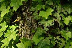 Leaf, Plant, Flora, Tree stock images