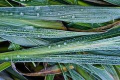 Leaf, Plant, Grass Family, Grass