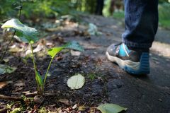 Leaf, Plant, Grass, Tree royalty free stock photo