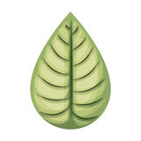 Leaf plant isolated icon design Royalty Free Stock Photos