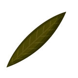 Leaf plant isolated icon design Royalty Free Stock Photo