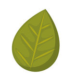 Leaf plant isolated icon design Stock Photos