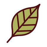 Leaf plant isolated icon design Stock Images