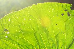A leaf of a plant on a skylight. soft focus stock photos