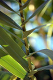 Leaf plant Stock Photos