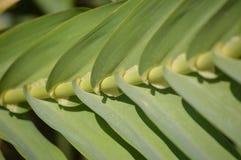 Leaf plant Royalty Free Stock Image