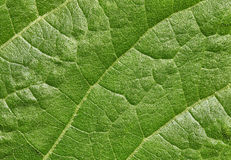 Leaf of plant surface background Stock Image
