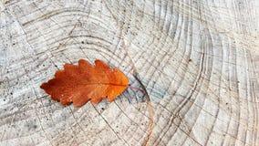 Leaf, Plant, Wood, Tree