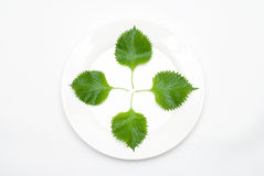 Leaf on the plate Stock Photography