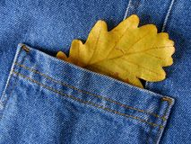 Leaf in pocket Royalty Free Stock Image