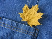 Leaf in pocket Royalty Free Stock Images