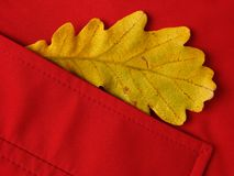 Leaf in pocket Royalty Free Stock Photo