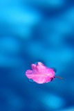 Leaf on pool Stock Images
