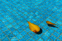 Leaf in pool Royalty Free Stock Image