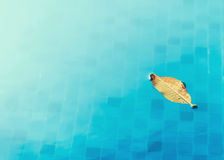 Leaf in pool Stock Image