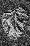 Leaf print Royalty Free Stock Images