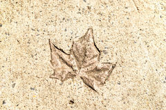 Leaf Print On Concrete. A leaf print on dry concrete taken on a sunny day Stock Photos