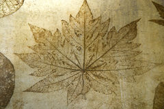 Leaf print on concrete texture Royalty Free Stock Image