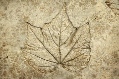 Leaf print on concrete texture Royalty Free Stock Photography
