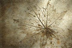 Leaf print on concrete texture Stock Image