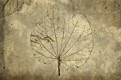 Leaf print on concrete texture Stock Images
