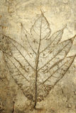 Leaf print on concrete texture Royalty Free Stock Photos