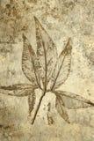 Leaf print on concrete texture Stock Photo