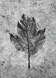 Leaf print in the stone Royalty Free Stock Photography