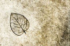 The leaf printed on street Royalty Free Stock Photo