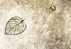 The leaf printed on street Royalty Free Stock Image