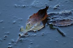 Leaf in a puddle Stock Photos