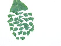 Leaf puzzle Royalty Free Stock Images