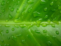 Leaf Rain Stock Image