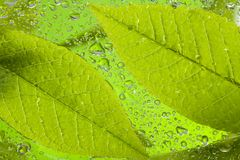 Leaf after rain Royalty Free Stock Image