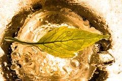 Leaf in rain Stock Photo