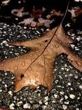 Leaf in rain Stock Images