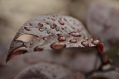 Leaf in rain Royalty Free Stock Photos