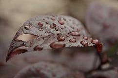 Leaf in rain royalty free stock photos