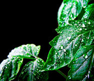 Leaf with rain droplets Stock Photography